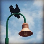 2 Birds on a Lamp Post having a Water Cooler Moment
